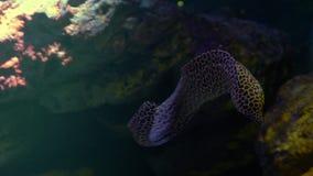 Υποβρύχιος κόσμος, πολλά πολύχρωμα κοραλλιογενείς ύφαλοι ψαριών, χέλια Moray, ή Muraenidae στοκ φωτογραφίες με δικαίωμα ελεύθερης χρήσης