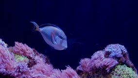Υποβρύχιος κόσμος, πολλές πολύχρωμες κοραλλιογενείς ύφαλοι ψαριών στοκ φωτογραφία