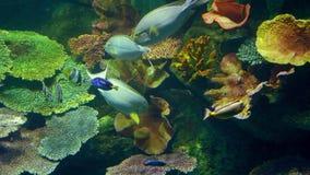Υποβρύχιος κόσμος, πολλές πολύχρωμες κοραλλιογενείς ύφαλοι ψαριών στοκ φωτογραφίες