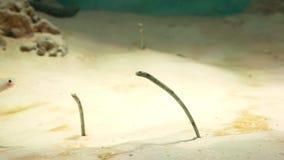 Υποβρύχιος κόσμος, πολλές πολύχρωμες κοραλλιογενείς ύφαλοι ψαριών, Gorgasia στοκ φωτογραφία με δικαίωμα ελεύθερης χρήσης