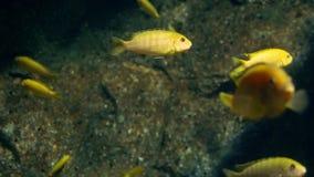 Υποβρύχιος κόσμος, πολλές πολύχρωμες κοραλλιογενείς ύφαλοι ψαριών στοκ εικόνα