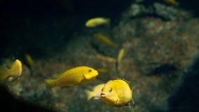 Υποβρύχιος κόσμος, πολλές πολύχρωμες κοραλλιογενείς ύφαλοι ψαριών στοκ εικόνες