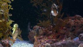 Υποβρύχιος κόσμος, πολλές πολύχρωμες κοραλλιογενείς ύφαλοι ψαριών seahorses στοκ εικόνες