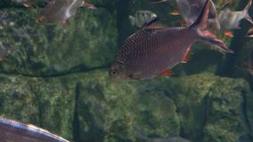Υποβρύχιος κόσμος, πολλές πολύχρωμες κοραλλιογενείς ύφαλοι ψαριών στοκ φωτογραφία με δικαίωμα ελεύθερης χρήσης