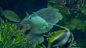 Υποβρύχιος κόσμος, πολλές πολύχρωμες κοραλλιογενείς ύφαλοι ψαριών στοκ εικόνα με δικαίωμα ελεύθερης χρήσης