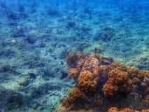 Υποβρύχιος παγκόσμιος ωκεανός κοραλλιογενών υφάλων Στοκ εικόνες με δικαίωμα ελεύθερης χρήσης