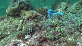Υποβρύχιος πυροβολισμός του θαυμάσιου και όμορφου υποβρύχιου κόσμου αστεριών, με τα κοράλλια και τα τροπικά ψάρια Σκληρά και μαλα φιλμ μικρού μήκους