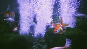 Υποβρύχιο αφηρημένο σχέδιο Λίγο ψάρι και αεροφυσαλίδες απόθεμα βίντεο