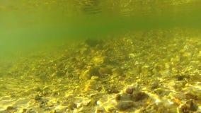 Υποβρύχιο βίντεο του του γλυκού νερού ρεύματος απόθεμα βίντεο