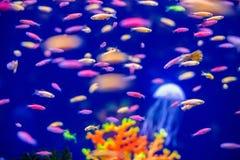 Υποβρύχιο ενυδρείο παγκόσμιων ψαριών στοκ εικόνες με δικαίωμα ελεύθερης χρήσης