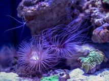 Υποβρύχιο ενυδρείο παγκόσμιων ψαριών στοκ φωτογραφίες