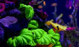 Υποβρύχιο ενυδρείο παγκόσμιων ψαριών στοκ εικόνα με δικαίωμα ελεύθερης χρήσης