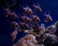 Υποβρύχιο ενυδρείο παγκόσμιων ψαριών στοκ εικόνες