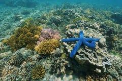 Υποβρύχιο θαλάσσιο αστέρι θάλασσας χρωμάτων ζωής με τα κοράλλια Στοκ Φωτογραφία