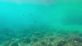 Υποβρύχιο μήκος σε πόδηα/ψάρια απόθεμα βίντεο