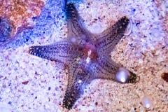 Υποβρύχιο παγκόσμιο τοπίο, ζωηρόχρωμη κοραλλιογενής ύφαλος με τα ψάρια αστεριών στοκ εικόνες