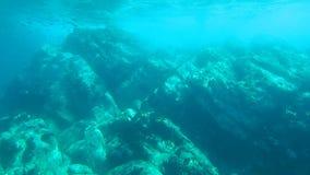 Υποβρύχιο πρόσωπο απότομων βράχων απόθεμα βίντεο