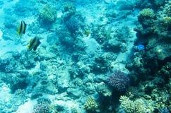 Υποβρύχιο τοπίο, κοράλλια Στοκ εικόνα με δικαίωμα ελεύθερης χρήσης