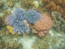 Υποβρύχιο τοπίο κοραλλιογενών υφάλων Μπλε και ρόδινη τοπ άποψη κοραλλιών Στοκ φωτογραφία με δικαίωμα ελεύθερης χρήσης
