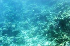 Υποβρύχιο τοπίο με τα κοράλλια Στοκ Εικόνες