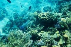 Υποβρύχιο τοπίο με τα κοράλλια Στοκ εικόνα με δικαίωμα ελεύθερης χρήσης