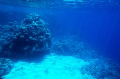 Υποβρύχιο τοπίο με τα κοράλλια Στοκ Φωτογραφίες