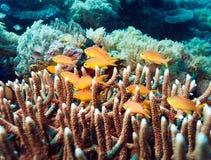 Υποβρύχιο τοπίο με τις εκατοντάδες των ψαριών Στοκ εικόνα με δικαίωμα ελεύθερης χρήσης