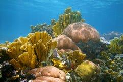 Υποβρύχιο τοπίο σε μια ζωηρόχρωμη κοραλλιογενή ύφαλο Στοκ Εικόνες