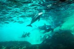 Υποβρύχιο υπόβαθρο δελφινιών Στοκ Φωτογραφίες