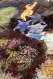 Υποβρύχιο χρωματισμένο anemone στο ενυδρείο Στοκ φωτογραφία με δικαίωμα ελεύθερης χρήσης