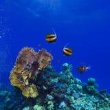 Υποβρύχιο ωκεάνιο σύνολο κήπων κοραλλιών του ζωηρόχρωμου sealife Στοκ Εικόνες