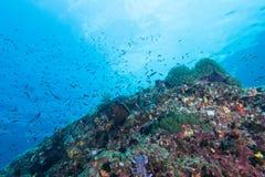 Υποβρύχιο Scape του anemone θάλασσας και της κοραλλιογενούς υφάλου Στοκ Φωτογραφίες