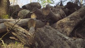 Υποκείμενοι σε ντάμπινγκ κορμοί δέντρων φιλμ μικρού μήκους
