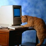 υπολογιστής γατών στοκ εικόνα