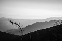 Υποχώρηση βουνών πεύκων Στοκ Φωτογραφίες