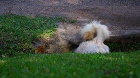 Υποχώρηση σκυλιών από την τρύπα της σωλήνωσης φιλμ μικρού μήκους