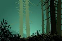 Υπόβαθρα φύσης σκηνής δέντρων πεύκων Στοκ Φωτογραφία