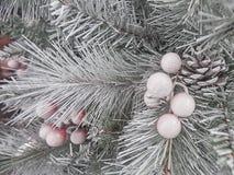 Υπόβαθρα χριστουγεννιάτικων δέντρων Στοκ Εικόνες