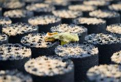 Υπόβαθρο άνθρακα, άνθρακας για τη θέρμανση Στοκ εικόνες με δικαίωμα ελεύθερης χρήσης