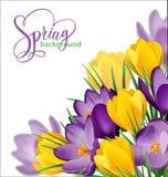 Υπόβαθρο άνοιξη με τα ανθίζοντας λουλούδια άνοιξη, κρόκοι διάνυσμα διανυσματική απεικόνιση