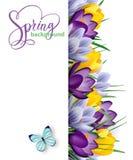 Υπόβαθρο άνοιξη με τα ανθίζοντας λουλούδια άνοιξη, κρόκοι διάνυσμα απεικόνιση αποθεμάτων