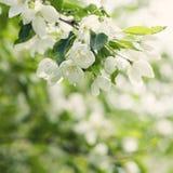 Υπόβαθρο άνοιξη με τα λουλούδια, πράσινα φύλλα Στοκ φωτογραφία με δικαίωμα ελεύθερης χρήσης