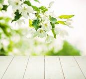 Υπόβαθρο άνοιξη με τα λουλούδια, πράσινα φύλλα Στοκ φωτογραφίες με δικαίωμα ελεύθερης χρήσης