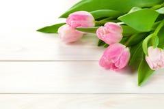 Υπόβαθρο άνοιξη με τα λουλούδια τουλιπών στοκ εικόνα με δικαίωμα ελεύθερης χρήσης
