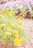 Υπόβαθρο άνοιξη με τα όμορφα κίτρινα λουλούδια στοκ εικόνα