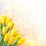 Υπόβαθρο άνοιξη με την κίτρινη τουλίπα Στοκ εικόνες με δικαίωμα ελεύθερης χρήσης
