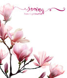 Υπόβαθρο άνοιξη με το άνθος brunch Magnolia διάνυσμα ελεύθερη απεικόνιση δικαιώματος
