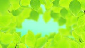 Υπόβαθρο άνοιξη, φυσικό πλαίσιο των όμορφων πράσινων φύλλων απόθεμα βίντεο