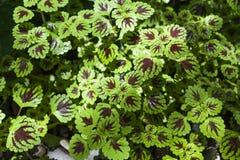 Υπόβαθρο έννοιας φύσης του όμορφου φύλλου λουλουδιών Στοκ εικόνες με δικαίωμα ελεύθερης χρήσης