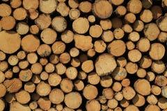Υπόβαθρο δέντρων περικοπών Στοκ εικόνες με δικαίωμα ελεύθερης χρήσης